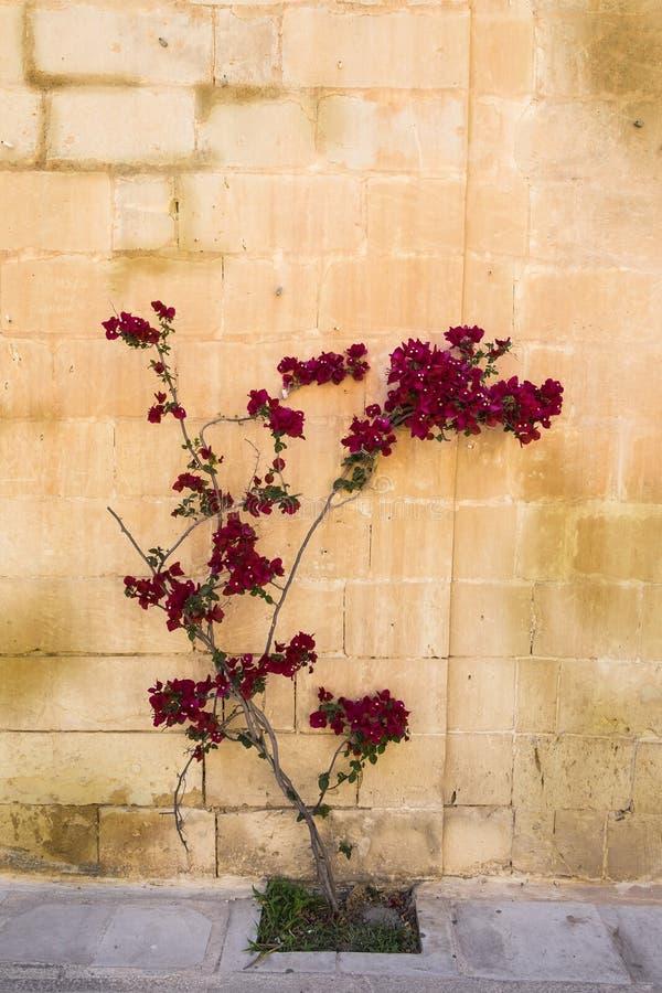 Árbol con las flores imagenes de archivo