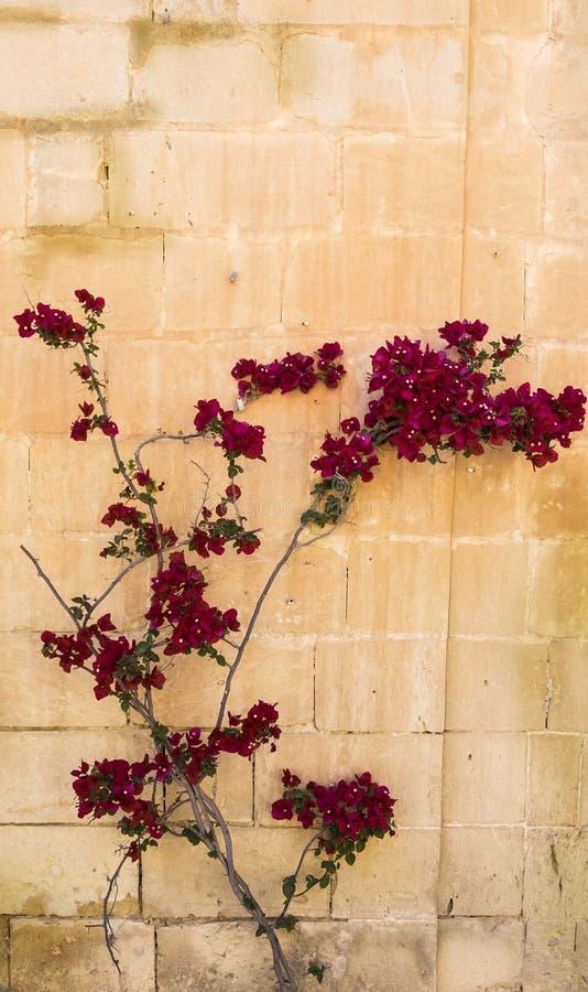Árbol con las flores imagen de archivo libre de regalías