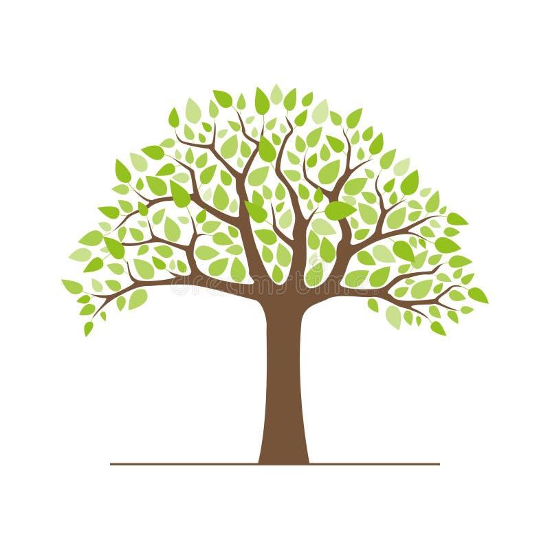 Árbol con las hojas verdes stock de ilustración