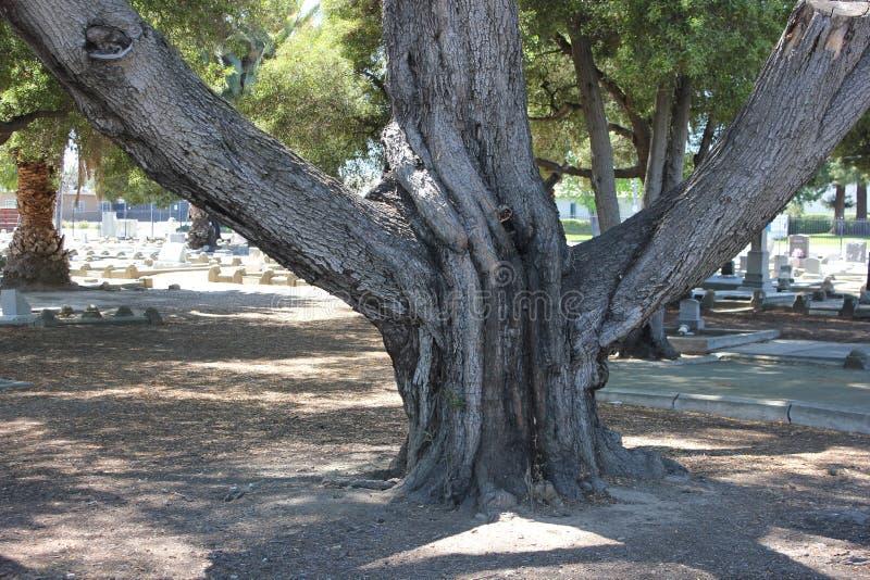 Árbol con las ramas grandes fotografía de archivo libre de regalías