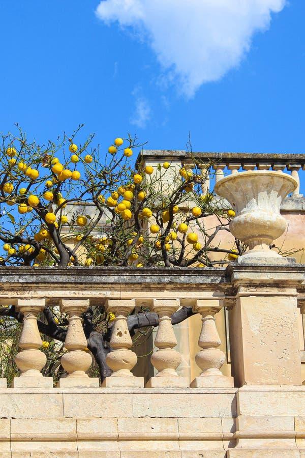 Árbol con los limones maduros en balcón medieval en el cuadrado de Piazza Duomo en Syracuse, Sicilia, Italia El cuadrado históric foto de archivo libre de regalías