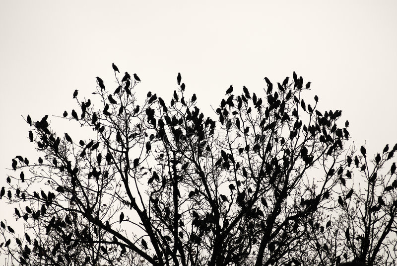 Árbol con los pájaros fotos de archivo