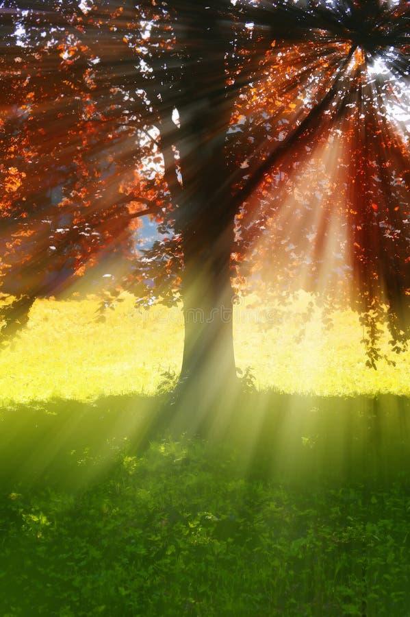 Árbol con los rayos del sol foto de archivo libre de regalías