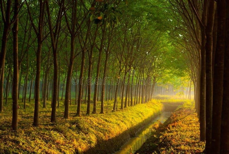 Árbol con luz del sol fotos de archivo libres de regalías