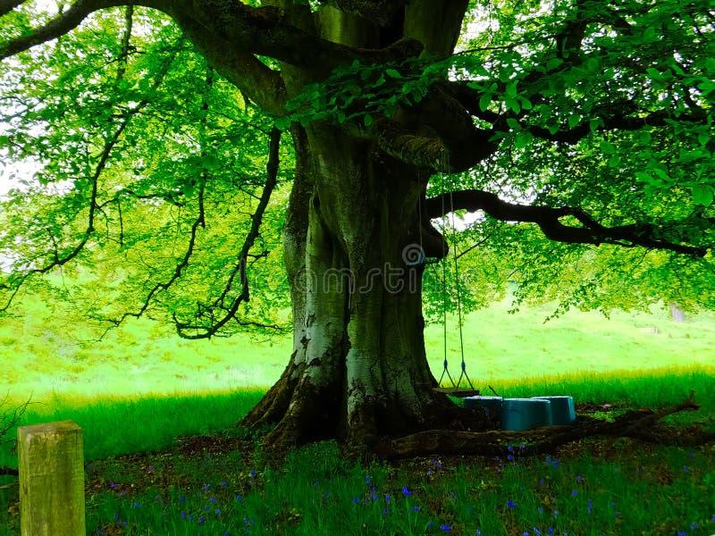 Árbol con una oscilación en un jardín escocés imagen de archivo