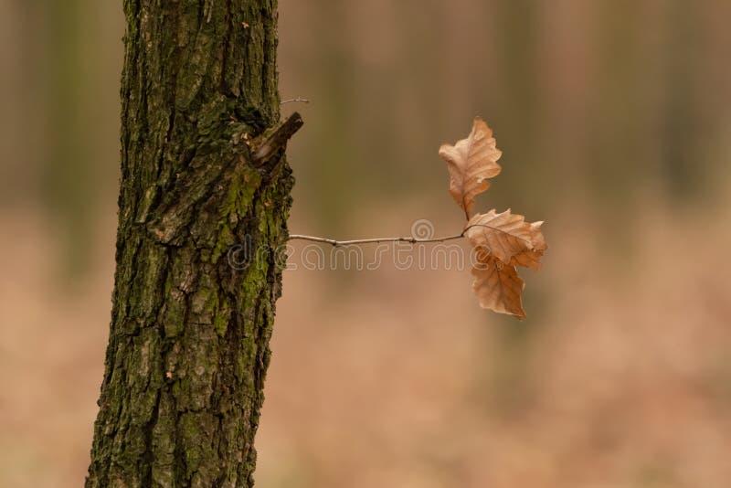 Árbol con una rama imagen de archivo