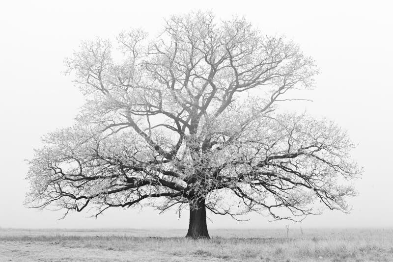 Árbol congelado fotografía de archivo libre de regalías