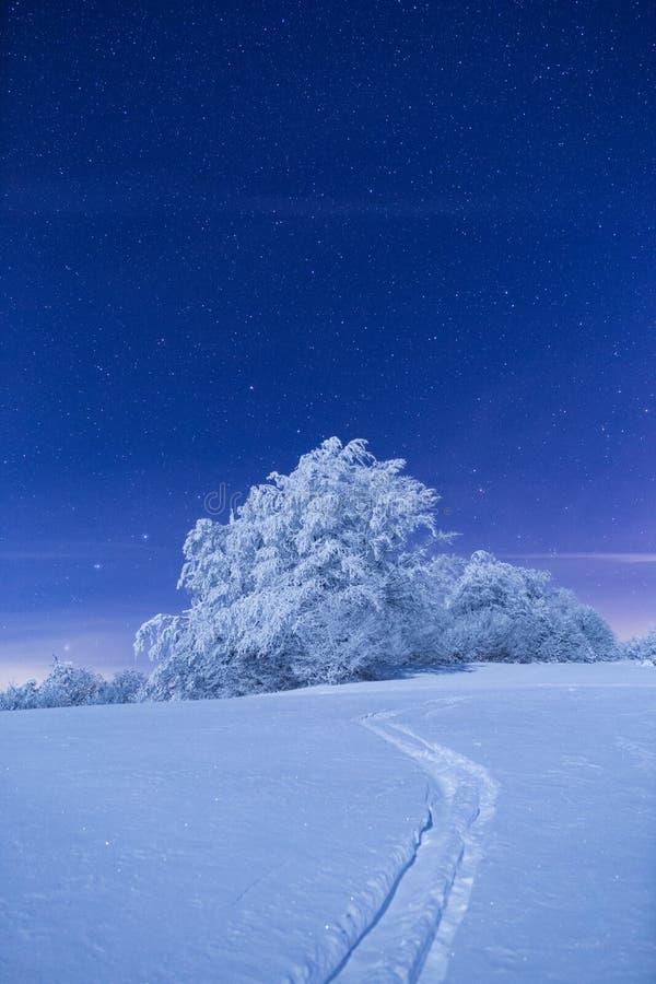 Árbol congelado debajo de un cielo llenado de las estrellas fotografía de archivo libre de regalías