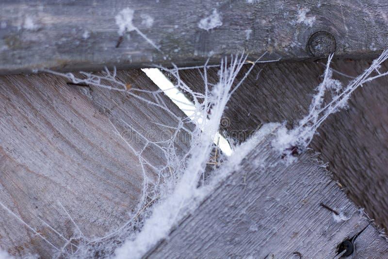 Árbol congelado en las montañas del invierno Árboles nevados Cierre del bosque de la helada del invierno para arriba imagen de archivo libre de regalías
