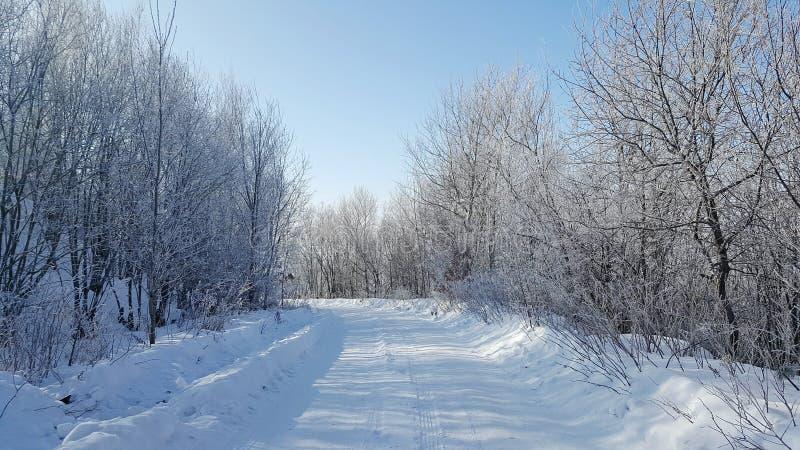 Árbol congelado mágico de la nieve del invierno fotografía de archivo libre de regalías