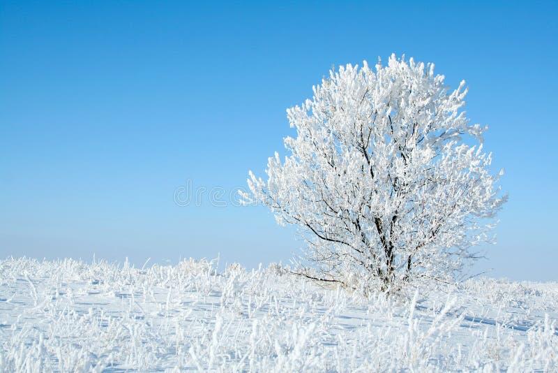 Árbol congelado solo. fotografía de archivo