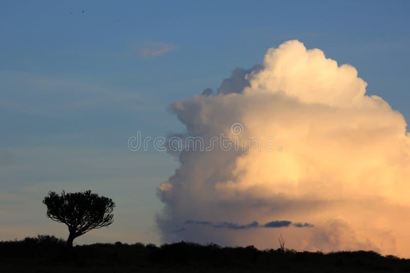 Árbol contra la nube imagen de archivo