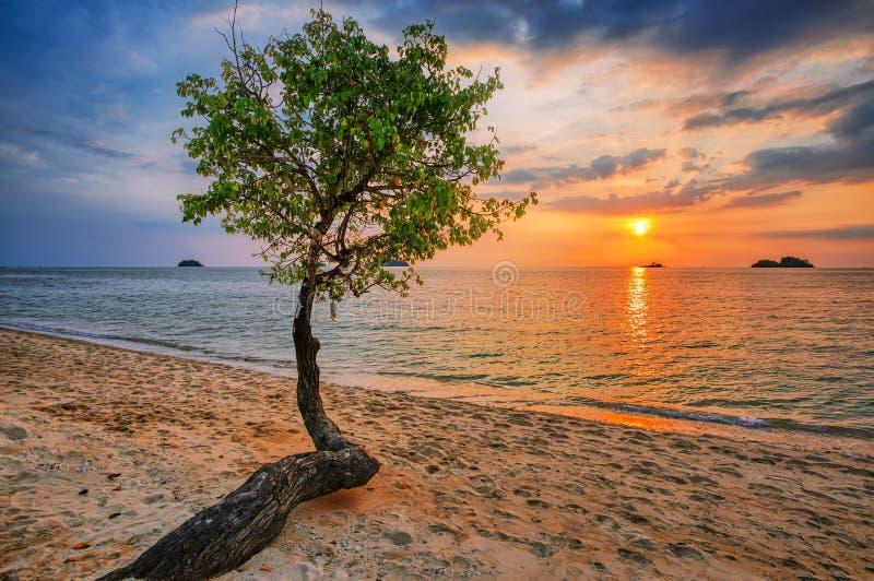 Árbol contra la puesta del sol imagen de archivo
