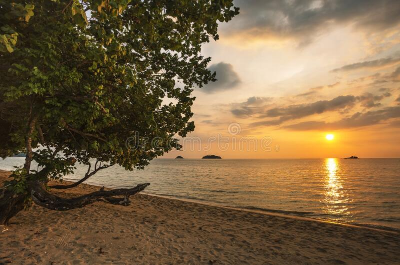 Árbol contra la puesta del sol imágenes de archivo libres de regalías