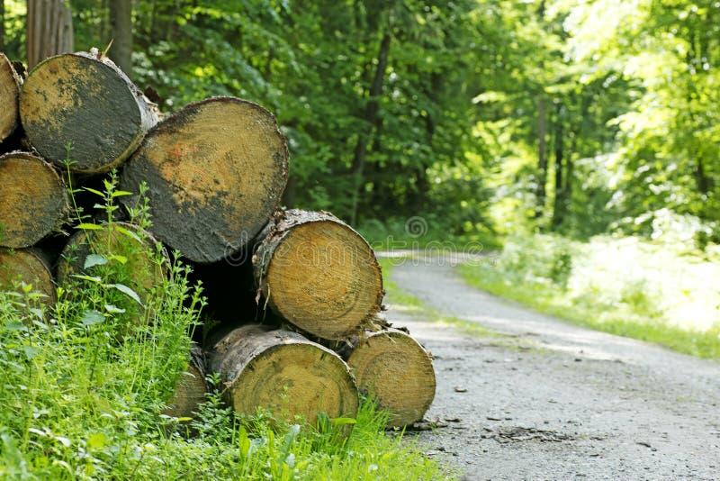 Árbol cortado en bosque alemán salvaje con los megapíxeles 6480 de un fondo 50,6 del camino con 4320 pixeles imagenes de archivo