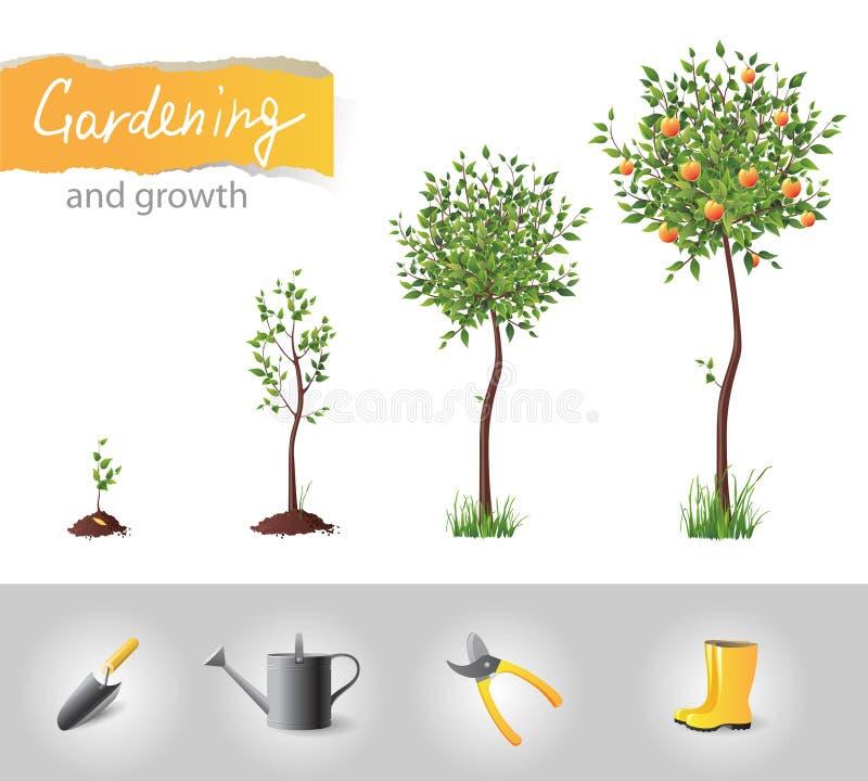 Árbol creciente ilustración del vector