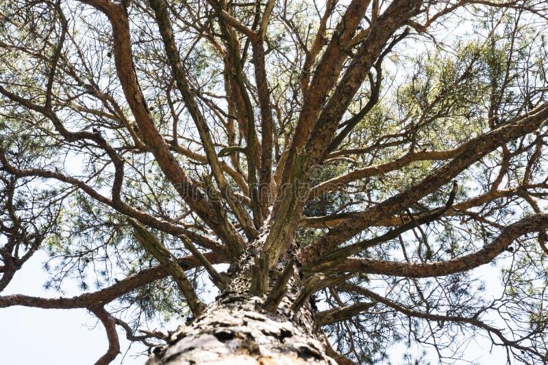 Árbol creciente viejo imagen de archivo
