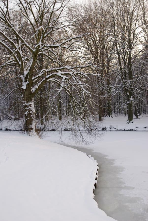 Árbol cubierto con nieve imagen de archivo libre de regalías