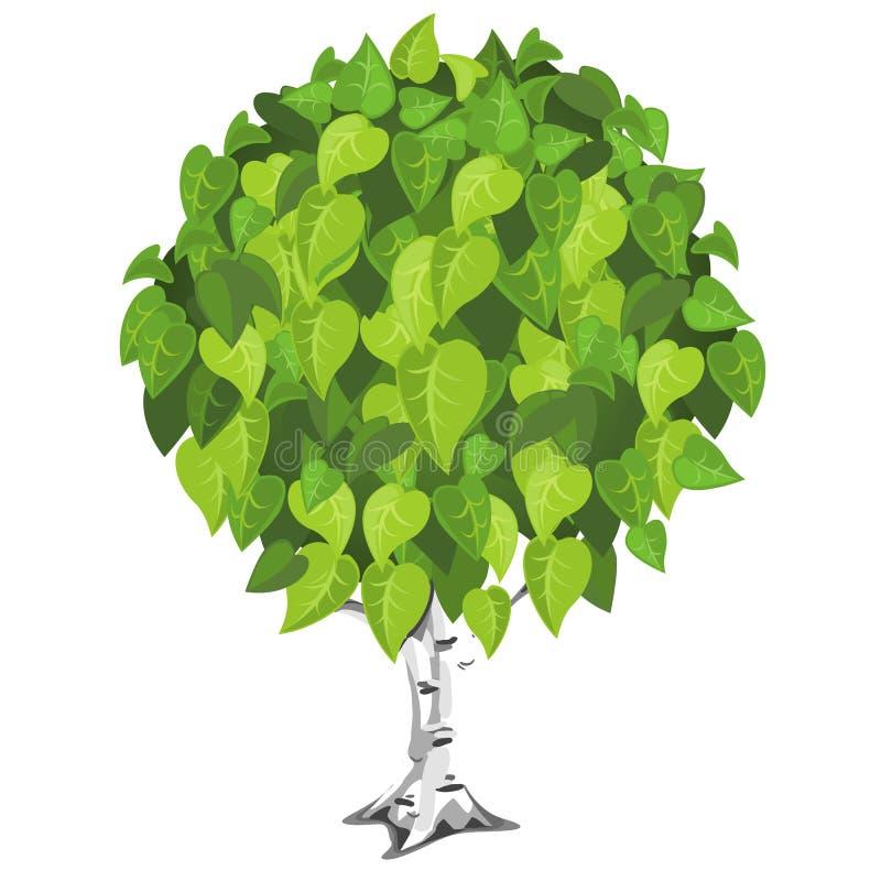 Árbol de abedul con follaje verde enorme ilustración del vector