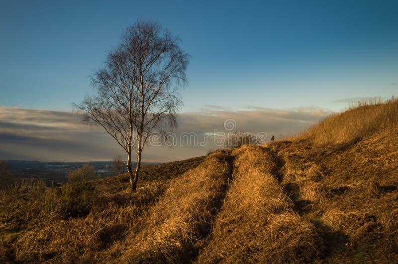 Árbol de abedul de plata solitario a finales del sol del invierno de la tarde imagenes de archivo