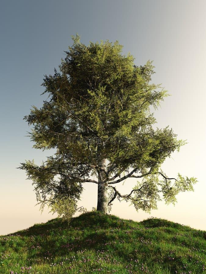 Árbol de abedul solitario stock de ilustración
