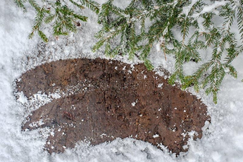 Árbol de abeto de la Navidad en un tablero de madera con la nieve, fondo del marco de la postal del invierno fotografía de archivo