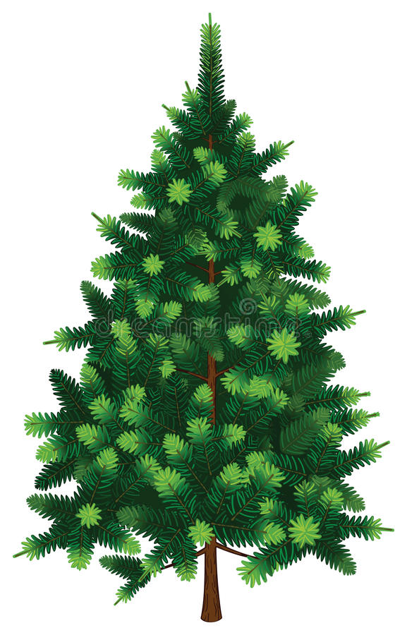 Árbol de abeto del vector libre illustration