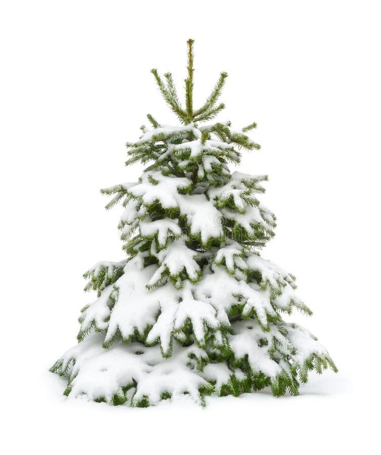 Árbol de abeto nevado aislado en blanco imágenes de archivo libres de regalías