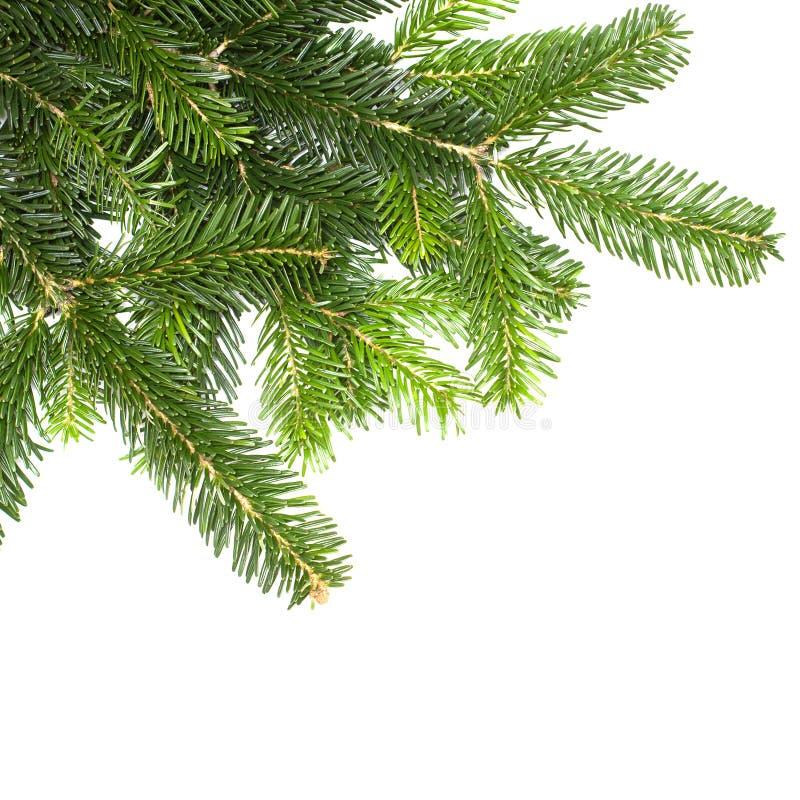 Árbol de abeto verde de la Navidad aislado foto de archivo