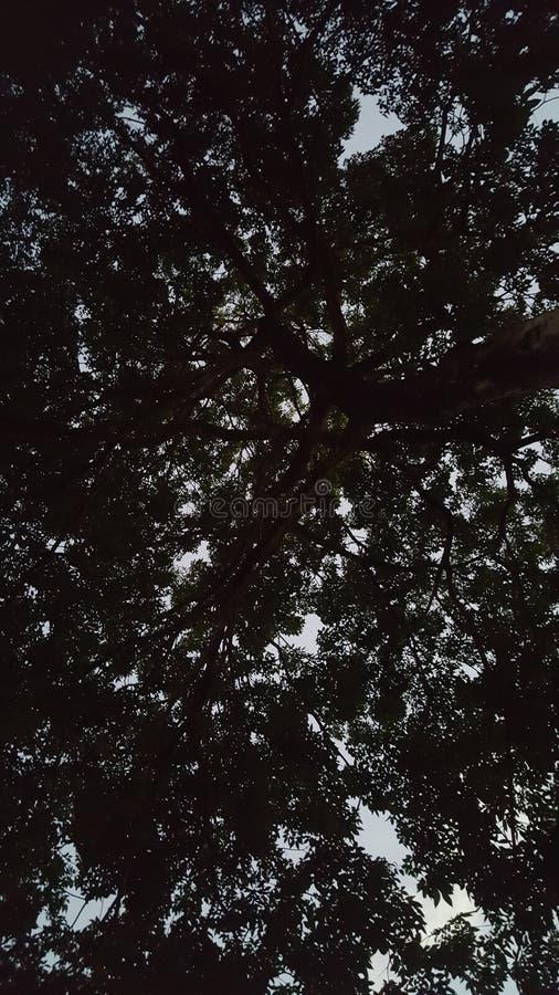 Árbol de amor imagenes de archivo