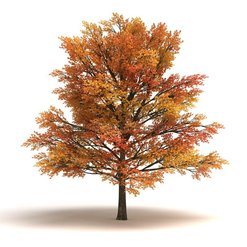 Árbol de arce libre illustration