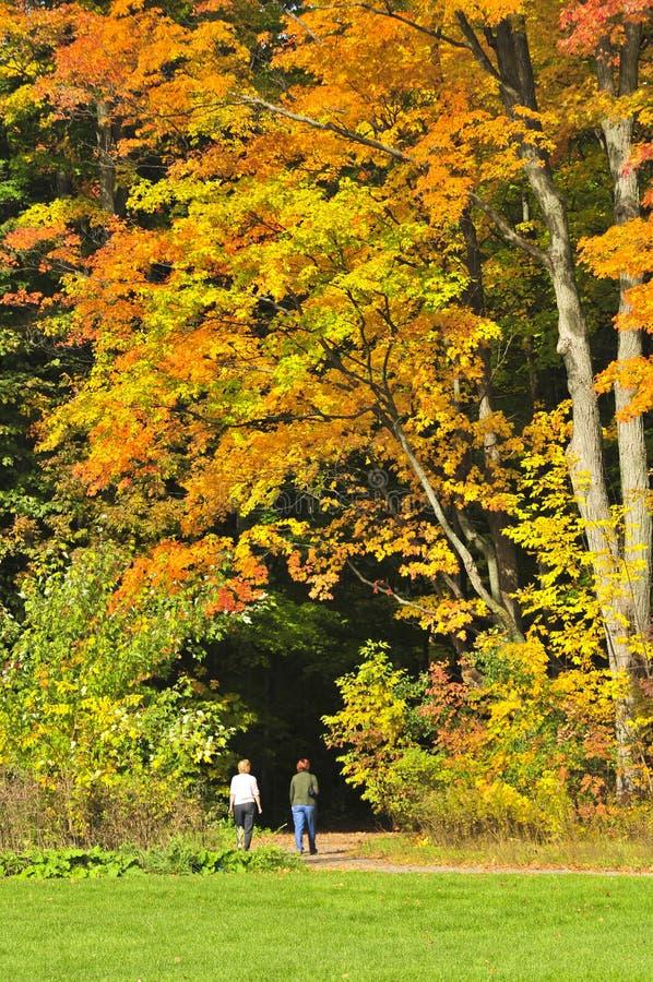 Árbol de arce del otoño fotografía de archivo
