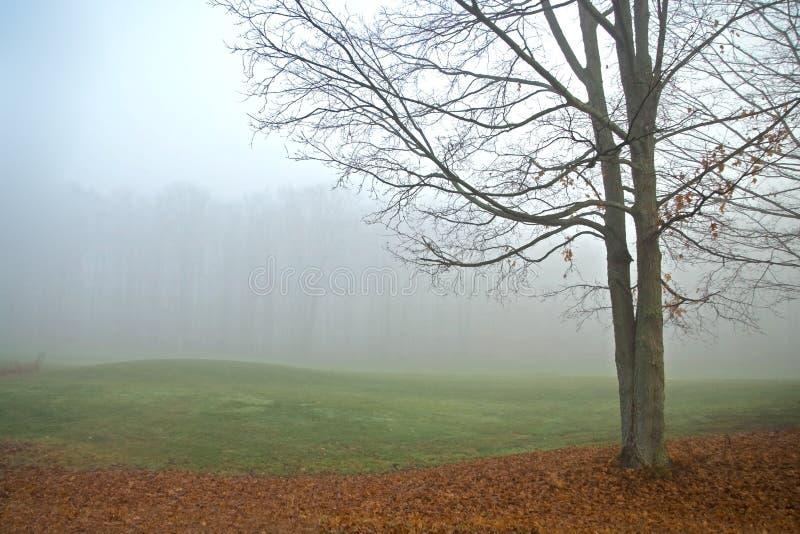 Árbol de arce en niebla foto de archivo