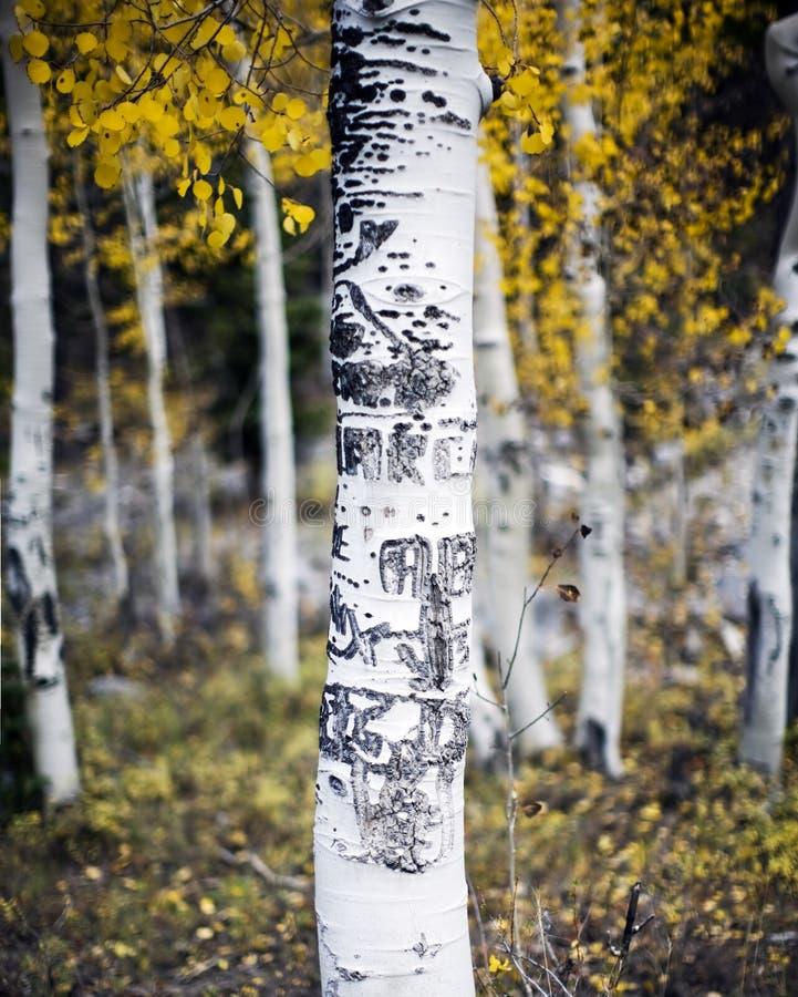 Árbol de Aspen con las tallas foto de archivo libre de regalías