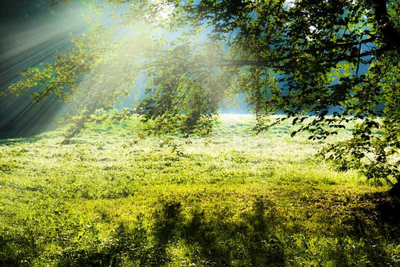 Árbol de Autmn fotos de archivo