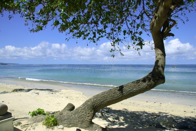 Árbol de Bali imagen de archivo