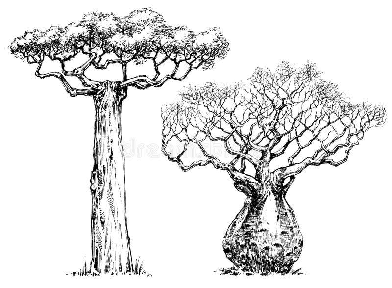 Árbol de Baoba ilustración del vector