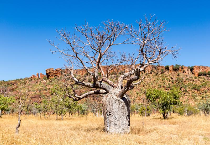 Árbol de Boab en Australia rural interior imagenes de archivo