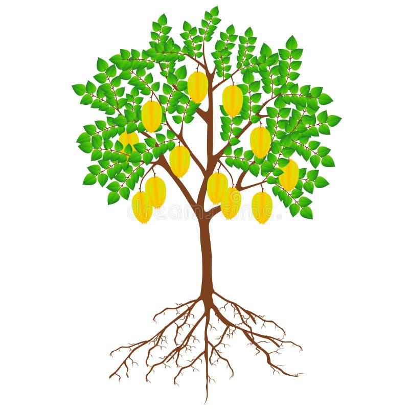 Árbol de carambola con frutas y raíces sobre fondo blanco ilustración del vector