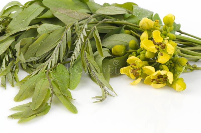 Árbol de Cassod, vaina de cobre tailandesa (siamea del sen (fuga.) Irwin y Barneby), leguminosas - ceasalpinioideae. fotografía de archivo
