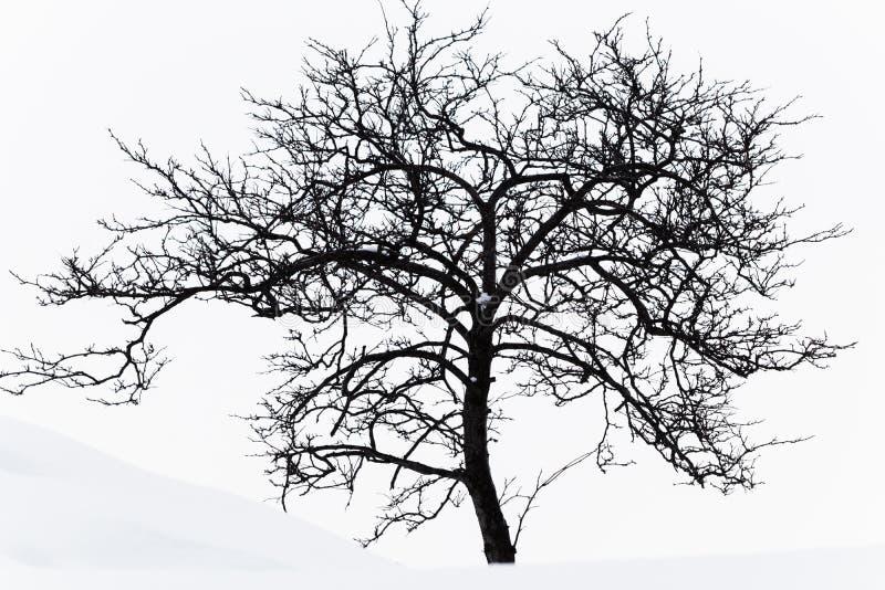 Árbol de ciudad perdido después de la nevada imagen de archivo