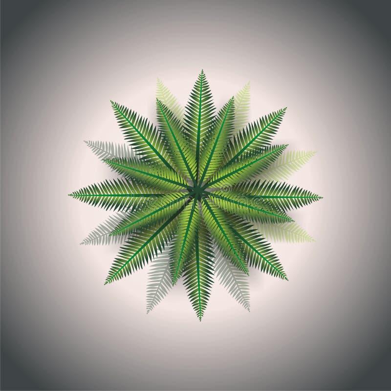 Árbol de coco stock de ilustración