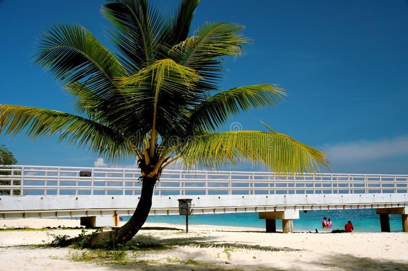 Download Árbol de coco foto de archivo. Imagen de cielo, palma, paraíso - 184114