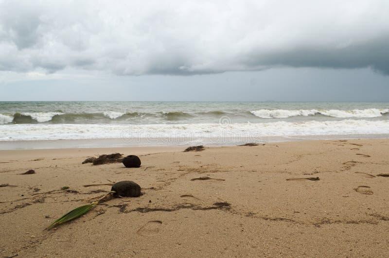 ?rbol de coco del brote en la playa vac?a imagen de archivo libre de regalías
