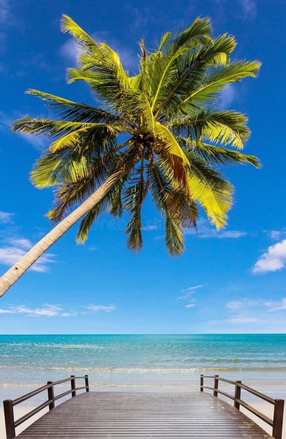 Árbol de coco en la playa fotos de archivo libres de regalías
