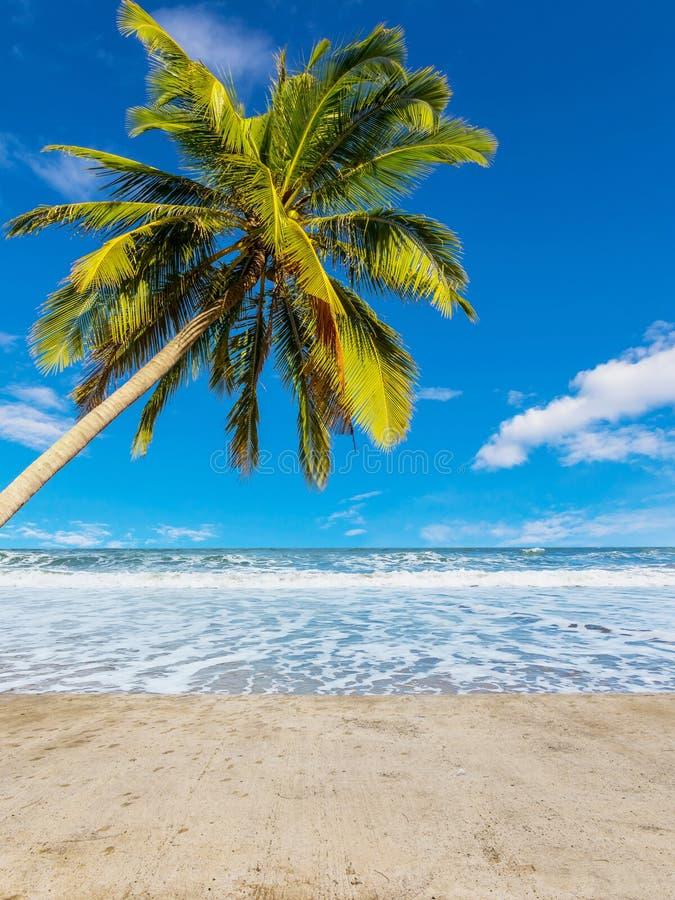 Árbol de coco en la playa blanca imagenes de archivo