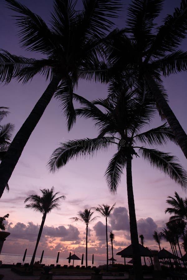Árbol de coco en la salida del sol imagenes de archivo