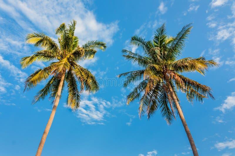 Árbol de coco en luz del día foto de archivo