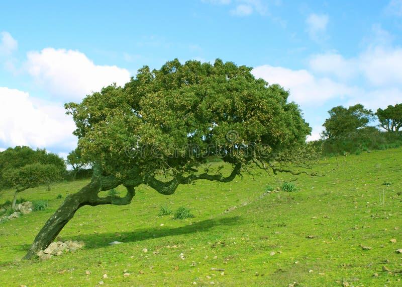 Árbol de corcho doblado foto de archivo