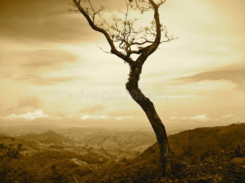 Árbol de Costa Rica imagen de archivo libre de regalías